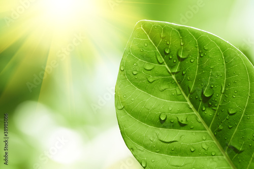 Green leaf with water drops on it