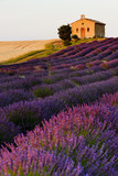 chapel with lavender and grain fields, Plateau de Valensole, Pro - 38986098
