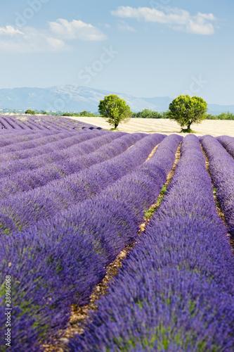 Lawendowe pole, Plateau de Valensole, Provence, Francja
