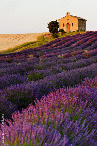 Poster chapel with lavender and grain fields, Plateau de Valensole, Pro