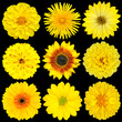 Selection of Yellow Flowers Isolated on Black