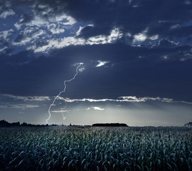 Storm and the corn field