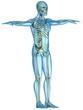 Scheletro e corpo umano raggi X