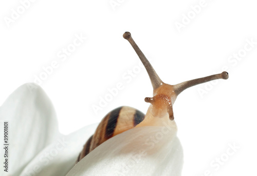 small snail on a flower