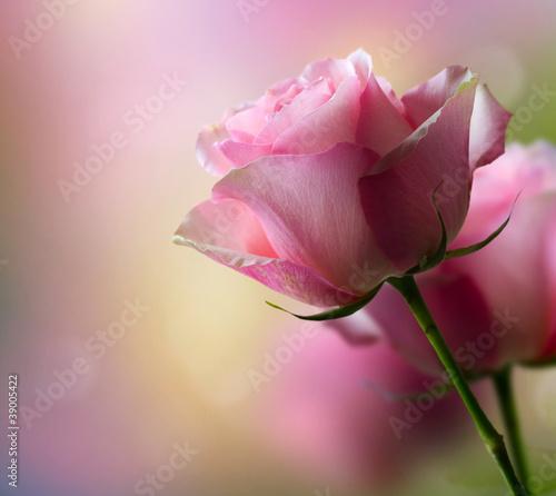 romantyczne-kwiaty-rozy