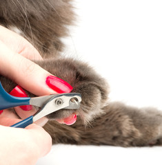 Trimming cat's nails