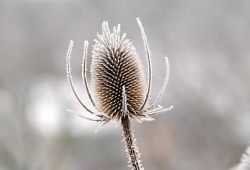 Frozen winter flower