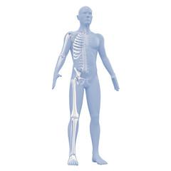 Silhouette des Mannes mit Skelett