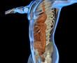 Intestino scheletro corpo umano raggi x