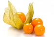 Physalis on white background
