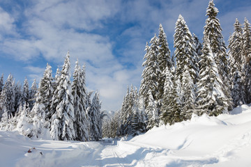 Winter mountain landscape with frozen trees