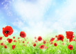 Fototapete Sonne - über - Blume