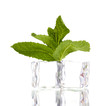 Fresh mint leaf and ice cubes isolated on white