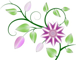 Beautiful abstract pink clematis illustration