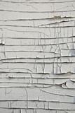 grunge wooden plywood white paint peeling backdrop poster