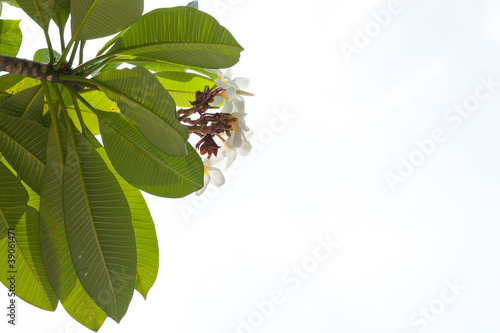 Leaves on a isolated background.