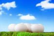 pure white eggs on green grass with sky