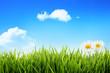 Spring grass field