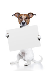 Dog holding a white banner