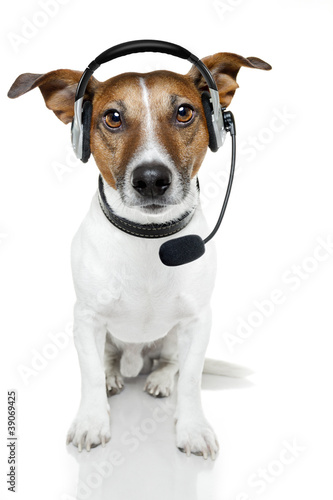 dog with headset