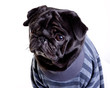 Black Mops in blue stripped sweatshirt