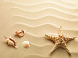 starfish with sand as background