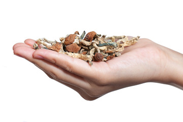 One Handful of Mushrooms