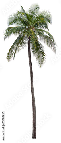 Papiers peints Palmier Coconut palm tree isolated on white background
