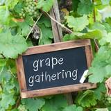 Grape gathering poster