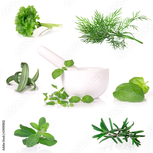 herbs collection over white