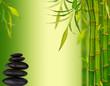 Fototapeten,bambus,schön,schönheit,hell