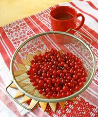 Season of cranberry
