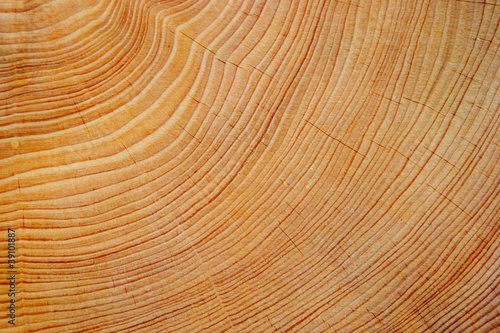 Cutted tree trunk wood texture - 39101887