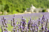 Lavender flower field, Abbey de Senanque. Provence.