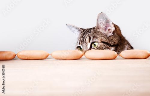 Katze und Würstchen