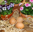 Hühnereier und Frühlingsblumen im Garten