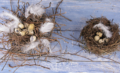 Easter: 2 bird nests with quail eggs and feathers