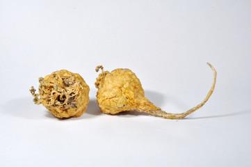 Maca Lepidium meyenii