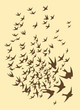 Silhouette of flock birds