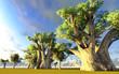 Fototapeten,eingeborener,affenbrotbäume,afrika,afrikanisch