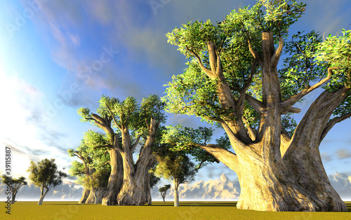 Fototapeten,eingeborener,afrika,afrikanisch,affenbrotbaum