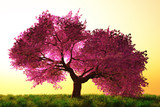 Fototapety Mysterious Cherry Blossom Trees