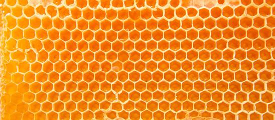 Beer honey in honeycombs.