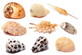 Seashells isolated on white