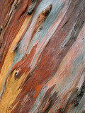 Fototapety eucalipto 1