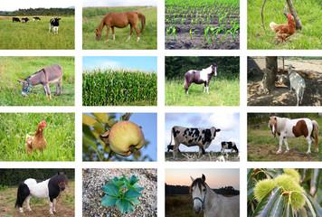 Collage de animales de granja y campos