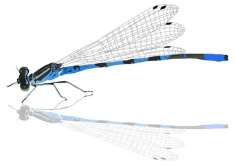 blue dragonfly with reflection