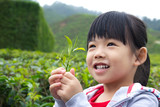 Fototapety Little child at tea plantation