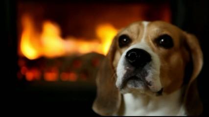 HD - Beagle
