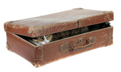 cute cat covered in old suitcase